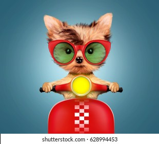 Funny adorable puppy sitting on a red motorbike and wearing sunglasses, isolated on color background. Delivery concept. Realistic 3D illustration