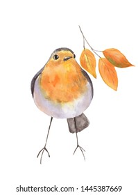 Funny bird and branch with autumn leaves. Hand drawn watercolor illustration isolated on white background.
