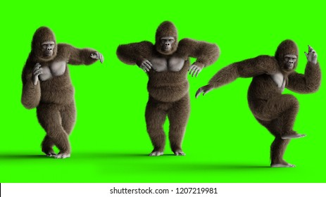 Funny brown gorilla dancing. Super realistic fur and hair. Green screen. 3d rendering.