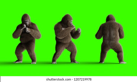 Funny brown gorilla fighting. Super realistic fur and hair. Green screen. 3d rendering.