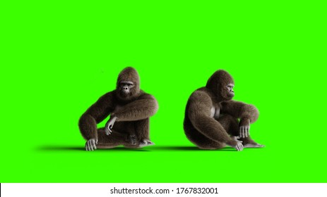 Funny brown gorilla idle. Super realistic fur and hair. Green screen. 3d rendering.