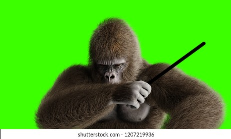 Funny brown gorilla play the drum. Super realistic fur and hair. Green screen. 3d rendering.