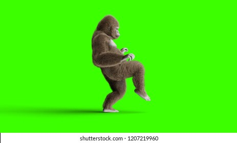 Funny brown gorilla walking. Super realistic fur and hair. Green screen. 3d rendering.