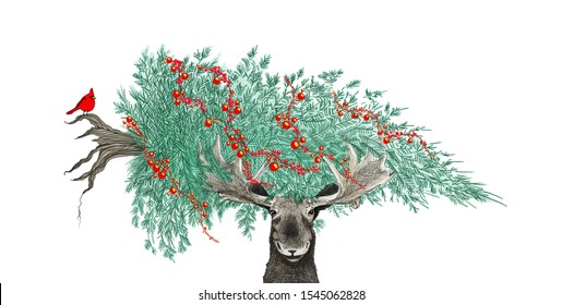 Funny Christmas scene with moose carrying a Christmas tree with cardinal and berries in hand drawn holiday sketch or illustration for party invites or fun animal designs