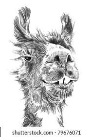 funny Llama face hand drawn sketch in high resolution isolated on white background