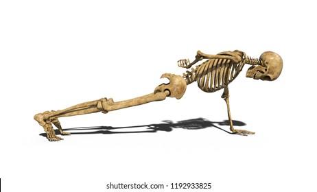 Funny skeleton doing push-ups on one arm, human skeleton exercising muscles on white background, 3D rendering