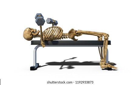 Funny skeleton lifting weights on bench, human skeleton exercising on white background, side view, 3D rendering