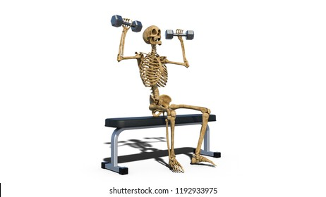 Funny skeleton lifting weights on bench, human skeleton training on white background, 3D rendering