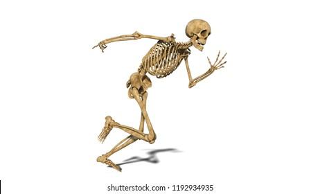 Funny skeleton running, human skeleton exercising on white background, 3D rendering