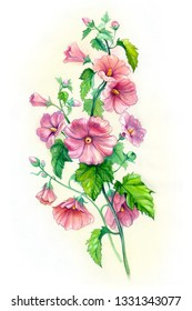 Garden hollyhock lcea Althea rosea. Bouquet of bright pink flowers of (also known as rose of Althea or Sharon, rose mallow) Watercolor hand drawn painting illustration.