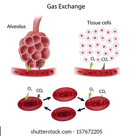 Gas exchange process
