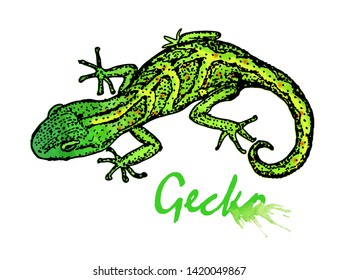 Gecko. Small green lizard. Gecko sketch with watercolor stains. Gecko logo design. Illustration isolated on white background.