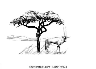 Gemsbok antelope (Oryx gazella) near a tree in africa. Hand drawn illustration. Collection of hand drawn illustrations (originals, no tracing)