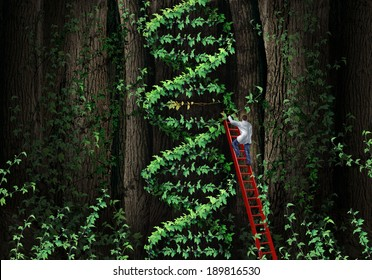 Gene therapy DNA helix concept with a medical genetics specialist doctor on a ladder climbing a plant as human chromosome anatomy as a biotechnology metaphor for genetic testing and repair.
