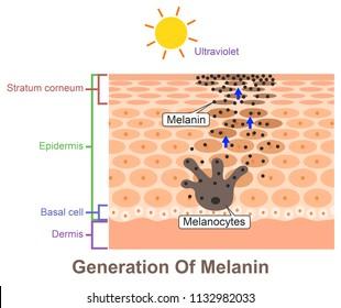 Generation Of Melanin