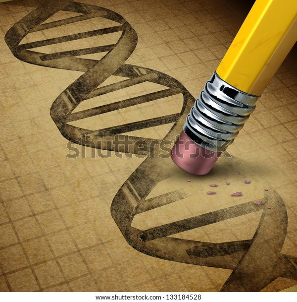 Genetic engineering and DNA manipulation as the biotechnology science of genetically modified foods or living organisms as an image of a dna strand on a parchment texture changed by a pencil eraser.