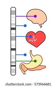 Genome-wide association study: association of genetic variants with different phenotypes such as brain, heart or digestive system diseases