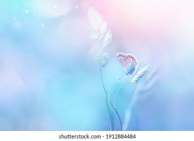 Gentle natural background in light pastel blue pink colors. Beautiful butterfly on blade of grass in nature.  Airy soft romantic  dreamy artistic spring  image.