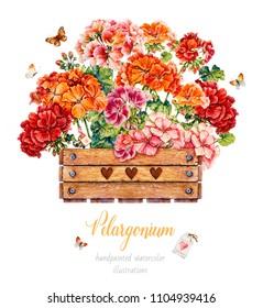 Geranium in a wooden box. Watercolor illustration