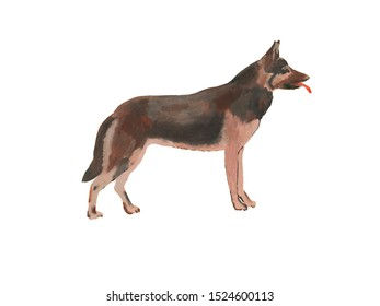 German shepherd dog on white background in jpeg (profile, watercolor and gouache drawing)
