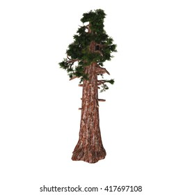 Giant Redwood Tree 3D Illustration - Sequoiadendron giganteum (giant sequoia, giant redwood, Sierra redwood, Sierran redwood, or Wellingtonia) is the sole living species in the genus Sequoiadendron.