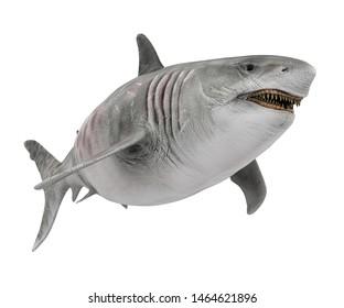Giant Shark Isolated. 3D rendering