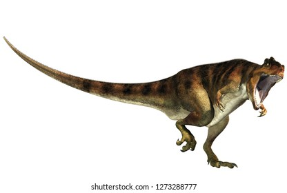 Giganotosaurus, one of the largest known terrestrial carnivores, was a carcharodontosaurid theropod dinosaur. Here is one with an open mouth.  This one is brown with black stripes. 3D Rendering.