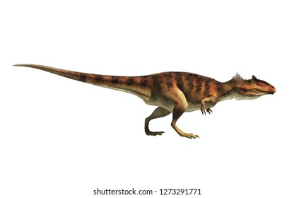 Giganotosaurus, one of the largest known terrestrial carnivores, was a carcharodontosaurid theropod dinosaur. Here is one in profile on a white background.  This one is brown. 3D Rendering.
