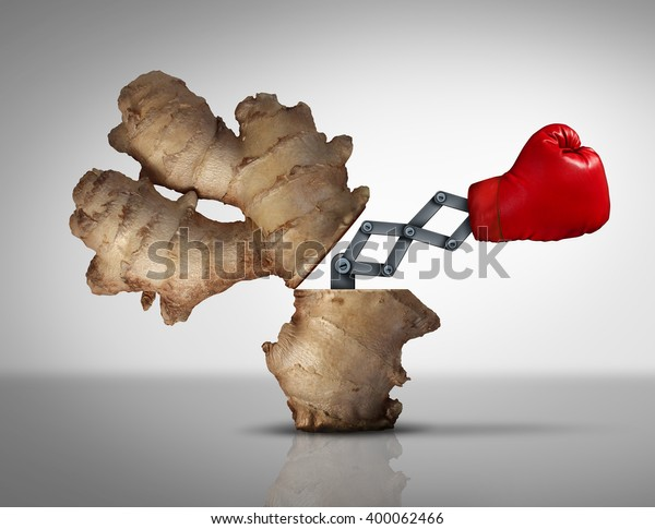 Ginger medicine concept as a natural herbal medicinal root opened with a boxing glove icon emerging with a 3D illustration mechanism as a metaphor for holistic or eastern traditional medication.