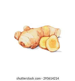 Ginger, Watercolor painting isolated on white background.