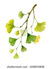 Gingko biloba branche with leaves. Watercolor hand painted illustration isolated on white background.