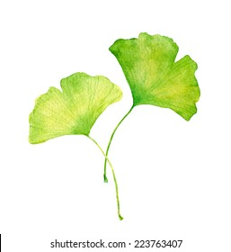 Ginkgo leaves. Water color