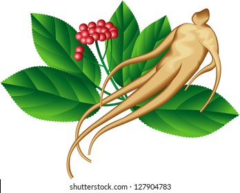 Ginseng root and a part of the plant. Raster image. Find an editable vector version in my portfolio.