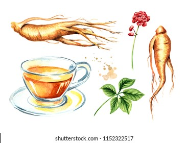 Ginseng tea set, Ginseng root, leaf, flower,  concept of healthy drink. Watercolor hand drawn illustration isolated on white background