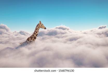 Giraffe above clouds . This is a 3d illustration