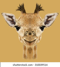 Giraffe animal face. Illustrated cute head of African giraffe. Realistic savannah wild fur giraffe portrait isolated on tan background.