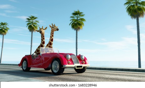 Giraffe couple in a retro car . Safari trip concept . This is a 3d render illustration .