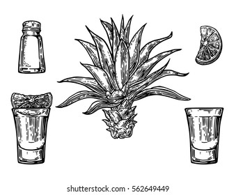 Glass and bottle of tequila. Cactus, salt and lime Hand drawn sketch set of alcoholic cocktails. illustration