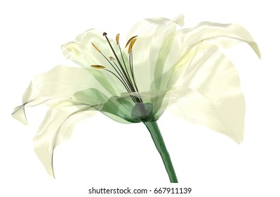glass flower isolated on white, the lily flower, 3d illustration