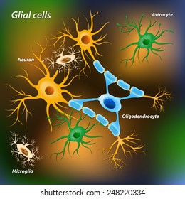 glial cells on the color background. Medical and science illustration