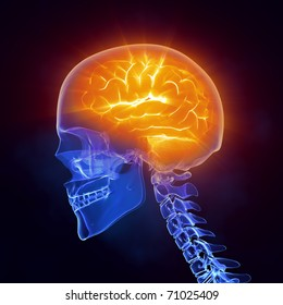 Glowing human brain in x-ray skull - left view  *** Also as FOOTAGE available in my portfolio