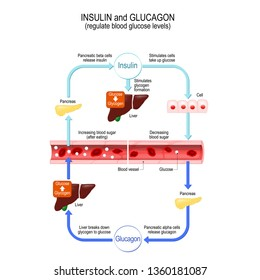 Glucose (simple sugar used by the cells), glucagon (hormone for control blood sugar levels and energy intake) and insulin (hormone that regulates the metabolism of carbohydrates, fats and protein)