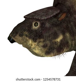 Glyptodont Mammal Head 3D illustration - Glyptodont was a herbivorous mammal that lived in North America during the Pleistocene Period.