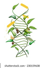 GMO modified plant and DNA spiral