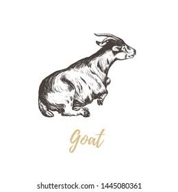 Goat hand drawing. Goat skech. Goat