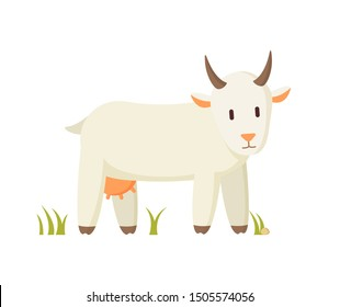 Goat smiling cartoon character on grass isolated. Creamy nanny farm animal standing on grass and looking flat illustration poster, farmyard inhabitant