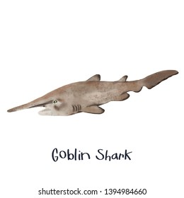 goblin shark fish realistic illustration