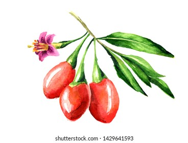 Goji berries or Lycium barbarum with leaves and flower on the branch. Watercolor hand drawn illustration isolated on white background