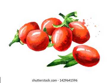 Goji berries or Lycium barbarum. Watercolor hand drawn illustration, isolated on white background