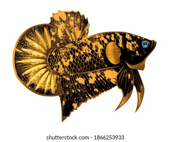 gold black star betta fish on white background with for logo